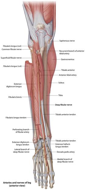 Cpt code for peroneal nerve injection pdf : Tratado de NutriпїЅпїЅo