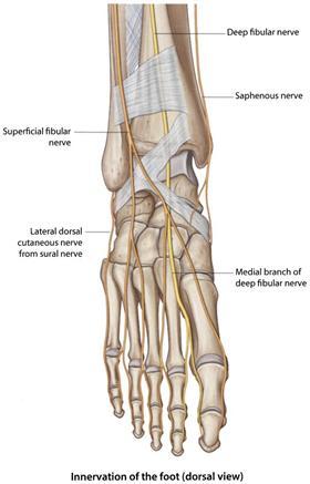 Ankle Block - Procedures CONSULT JAPAN
