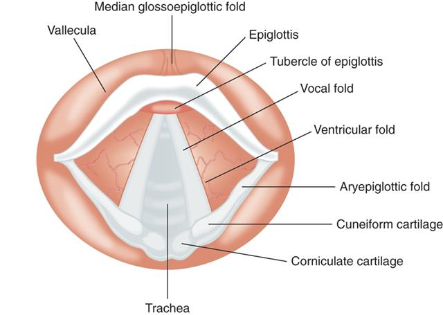 Awake (Sedated) Fiberoptic Intubation - Procedures CONSULT JAPAN