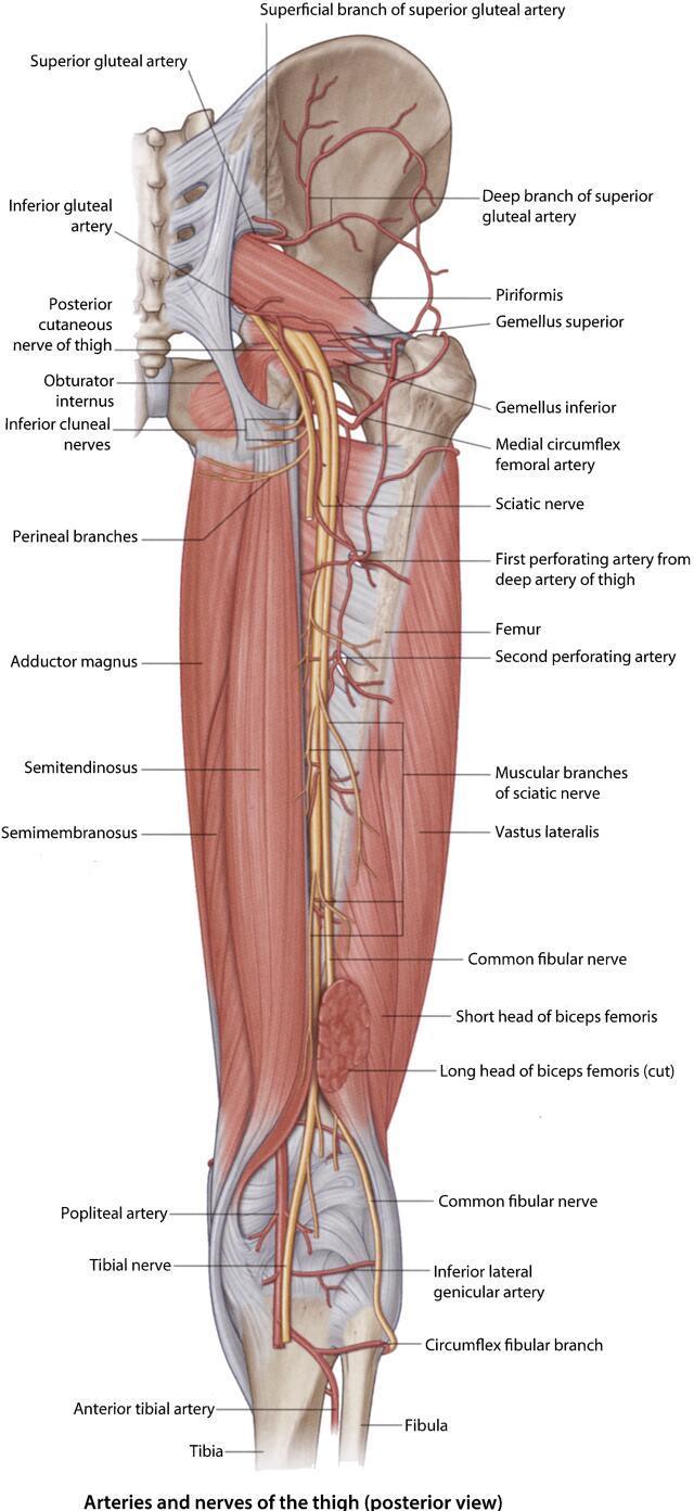 Popliteal Nerve Block - Procedures CONSULT JAPAN
